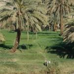 ägypten-nil-oase